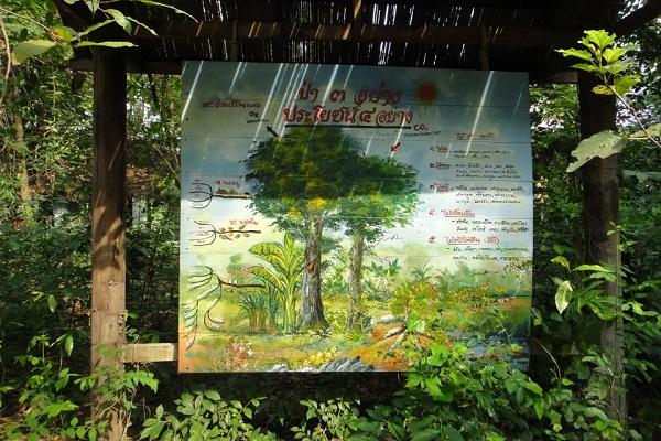 ป่า 3 อย่าง ประโยชน์ 4 อย่าง
