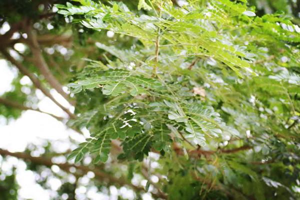 jamjureeyad