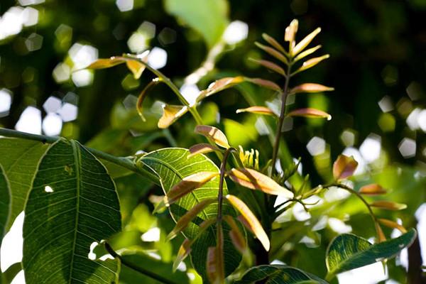 makokpahyod