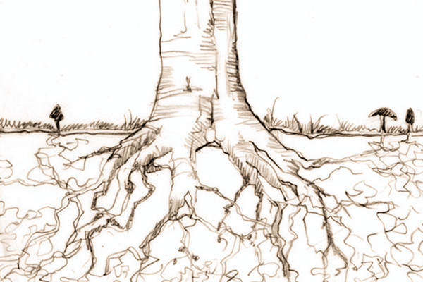 mycorrhizaewad