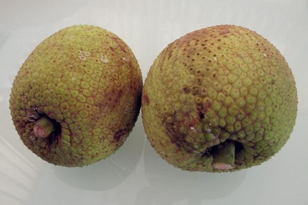 sakaepon