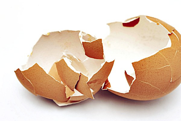 a broken open egg shell, concept of hatching and birth