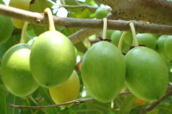 sarapeepon