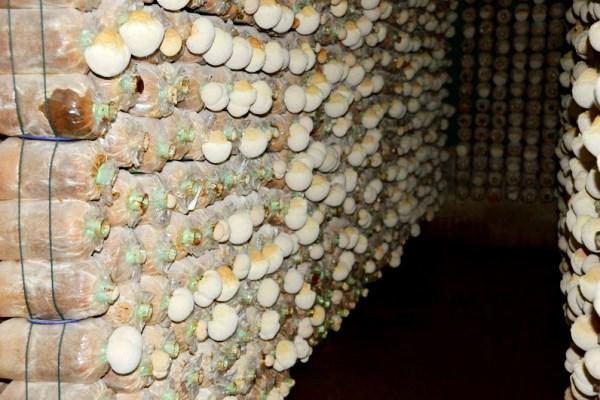 hedhaolingroom
