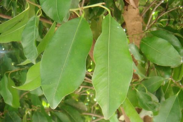 pikulbai