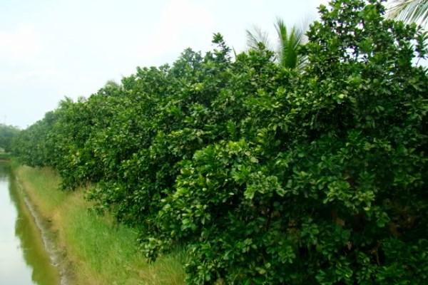 som-osuan