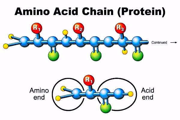 aminochain
