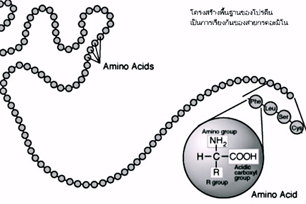 aminop